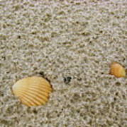 Shells In The Sand Poster