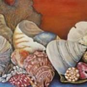 Shells On Shelf Poster