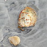 Shells On The Beach II Poster