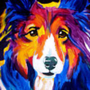 Sheltie - Missy Poster by Alicia VanNoy Call