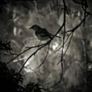 Shhhh A Bird Poster