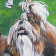 Shih Tzu And Butterfly Poster