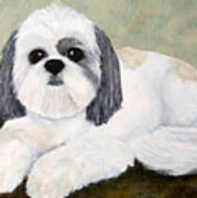 Shih Tzu Poster by Anne Gregorie