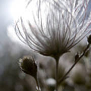 Shimmering Flower I Poster