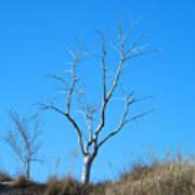 Shimmering Tree Poster