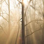 Shine On Through Poster