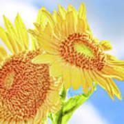 Shining Sunflowers Poster