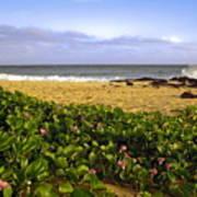 Shipwreck Beach Poster
