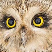 Short-eared Owl Face Poster
