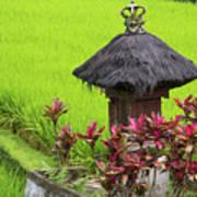 Shrine In Rice Field Poster