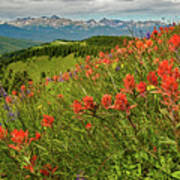 Shrine Pass Wildflowers Poster