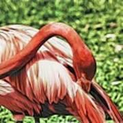 Shy Flamingo Poster