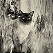 Siamese Cat Posing In Black And White Poster