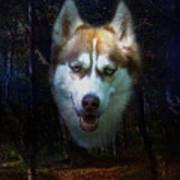 Siberian Husky Poster by Brian Roscorla