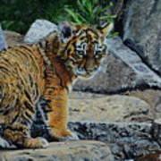 Siberian Tiger Cub Poster