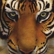Siberian Tiger I Poster