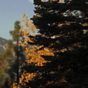 Sierra Autumn Moonset Poster