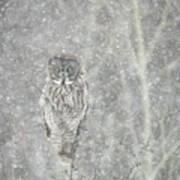 Silent Snowfall Portrait II Poster