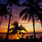 Silhouette Of Palm Tree On The Coast Poster