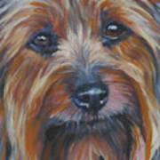 Silky Terrier Poster