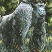 Silverback-king Of The Mountain Mist Poster