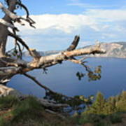 Silvery Tree Over Crater Lake Poster