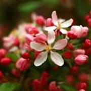 Simple Savory Spring Poster