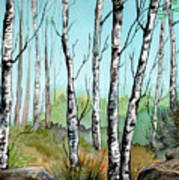 Simply Birches Poster