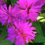 Simply Soft Pink Petals Poster