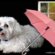 Singing In The Rain Poster by Starlite Studio