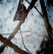 Single Bat Hanging Alone Poster
