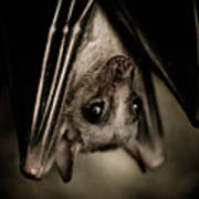 Single Bat Hanging Portrait Poster