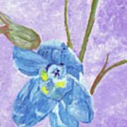 Single Delphinium Flower Poster