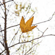 Single Leaf In Fall Poster