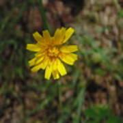 Single Yellow Flower Poster