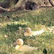Sitting Ducks Poster