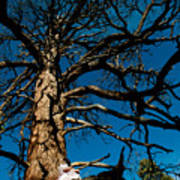 Sitting In Tree 2 Poster by Scott Sawyer