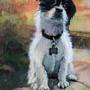 Sitting Pretty - Black And White Puppy Poster