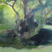 Sketch Of A Shady Glade. Poster