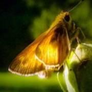 Skipper Butterfly Basking In Sun Poster