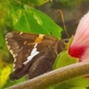 Skipper Trying To Hide Behind A Flower Poster