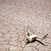 Skull In Desert Poster by Kelley King