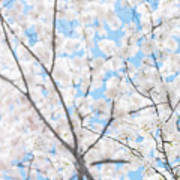 Sky Full Of Blossoms Poster