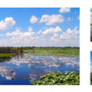 Skyscape Reflections Blue Cypress Marsh Florida Collage 1 Poster