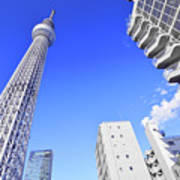 Skytree In Blue Poster