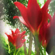Skyward Red Lilies Poster