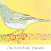 Slate Colored Junco The  Poster