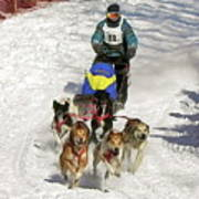 Sled Dogs In Action Poster