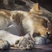 Sleeping Beauty,  Houston Zoo Poster