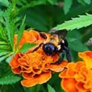 Sleepy Bumblebee Poster